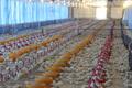 Ancaman Resistensi Antimikroba