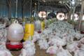 Pelarangan Penggunaan Antibiotik dan Implementasinya