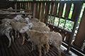 Lumbung Domba Tapal Kuda