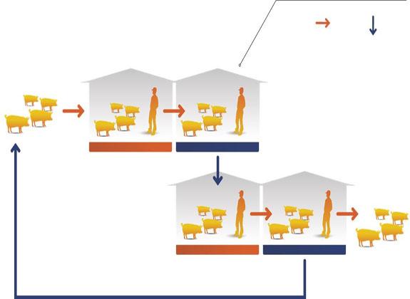 Langkah Pencegahan Penyakit Secara Sistemik di Peternakan Besar