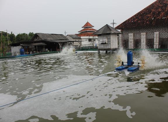 Bantuan Usaha Dukung Budidaya Udang di Madura