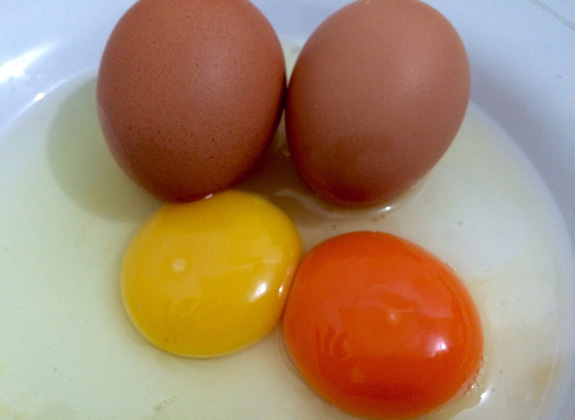 Jeli Memilih Telur Omega 3