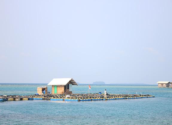 Raising the Thousand Islands Mariculture